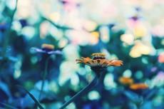 flower670