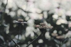 flower670-3