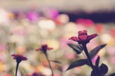 flower671-2