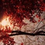 【高解像度】紅葉から覗く太陽(3パターン)