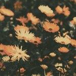 【高解像度】オレンジの花畑(3パターン)