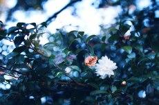 flower699