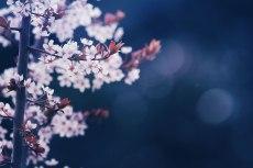 flower706-2