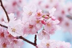flower710