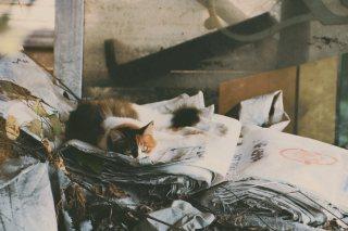 【高解像度】掃き溜めに猫(3パターン)