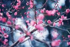 flower721