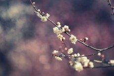 flower729-2