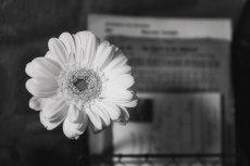 flower750-3