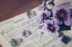 flower752