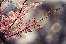 flower757-2
