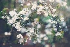 flower760-2