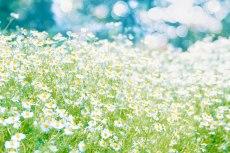 flower794