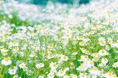 flower795