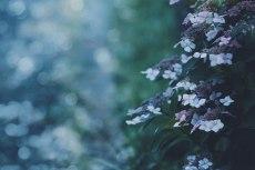 flower815