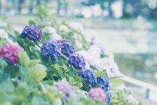 flower820