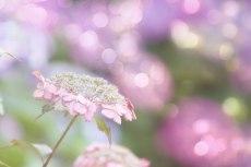flower822-2