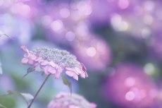 flower822