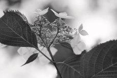 flower823-3