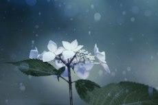 flower837-2