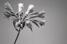 flower847-3