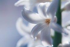 flower849