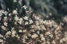 flower860-2