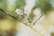 flower788-2