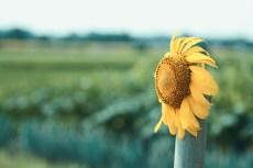 flower874