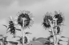 flower875-3