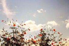 flower893-2