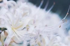 flower897-2