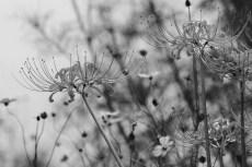 flower904-3