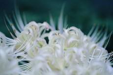 flower908-2