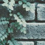 【高解像度】草が這うレンガの壁(3パターン)