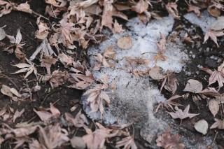【高解像度】消え残る雪と落ち葉