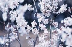 flower945