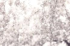 flower948-2