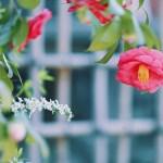 【高解像度】椿と雪柳(ツバキ・ユキヤナギ)(3パターン)