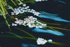 flower962