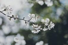 flower968-2