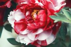 flower991