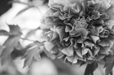 flower992-3