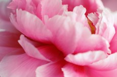 flower993