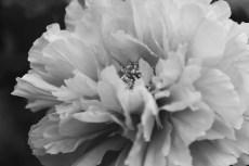 flower994-3