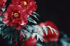 flower996
