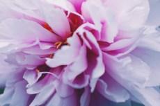 flower997