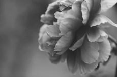 flower998-3
