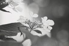 flower1034-3