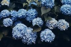flower1046