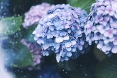 flower1053